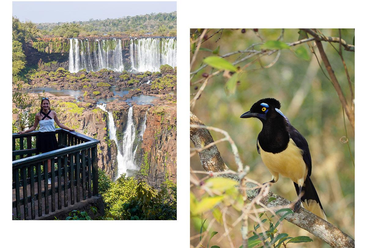 iguazu wasserfaelle argentinien brasilien reisetipps22 - Guide für einen Besuch der Iguazu Wasserfälle