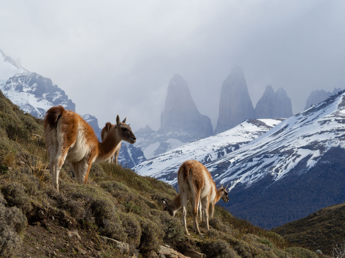 patagonien torres del paine nationalpark chile12 - Torres del Paine Nationalpark ohne W Trek