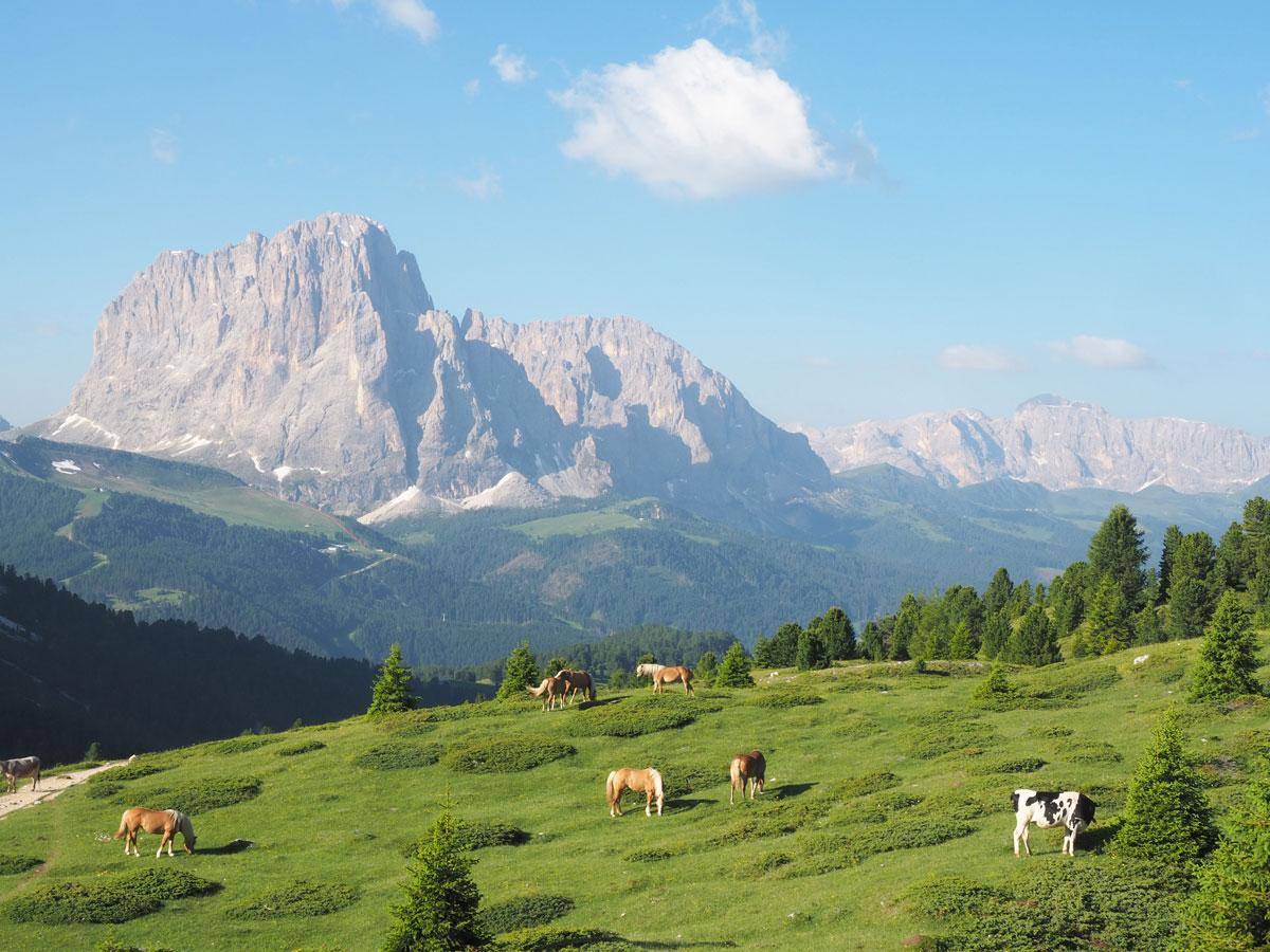 seceda groeden suedtirol dolomiten wandern 17 - Wandern auf die Seceda von Wolkenstein - Sonnenaufgang auf der Seceda