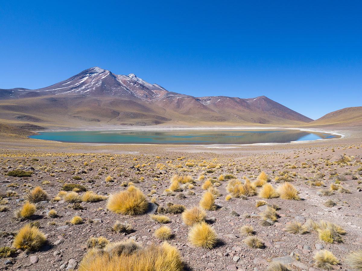 atacama chile laguna miscanti miniques - Als Selbstfahrer in der Atacama Wüste in Chile unterwegs