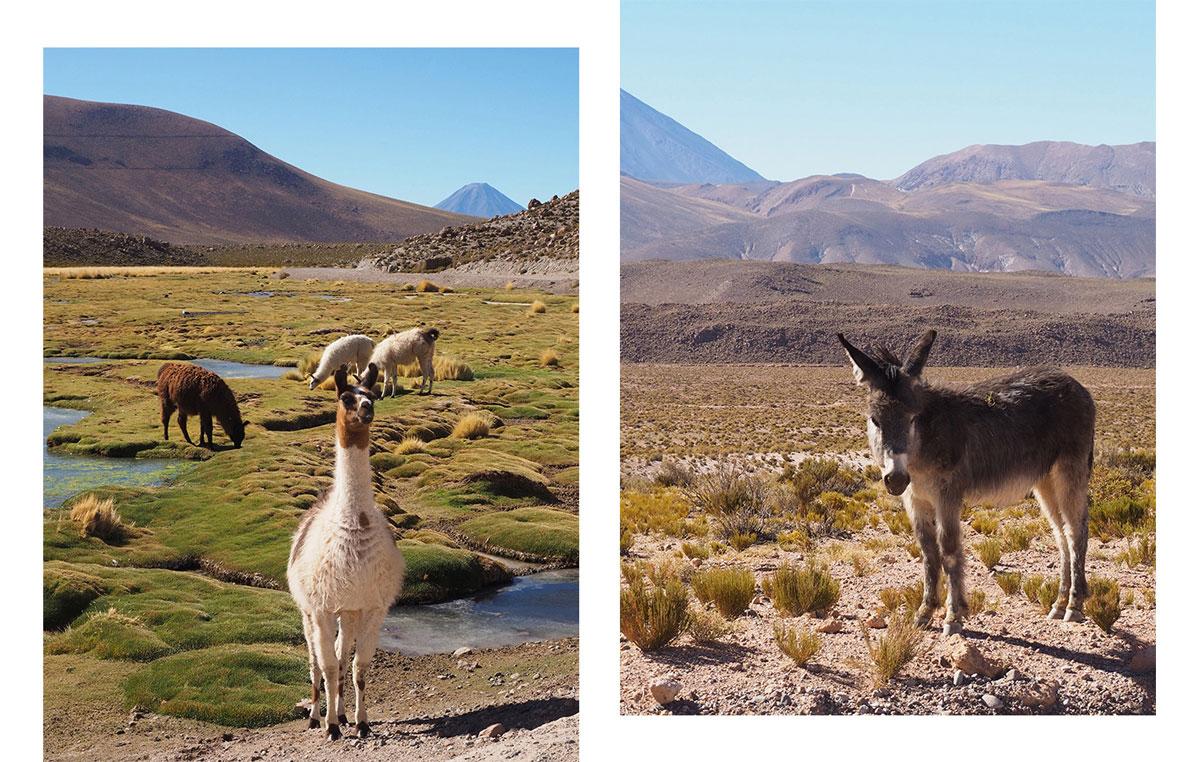 atacama el tatio - Als Selbstfahrer in der Atacama Wüste in Chile unterwegs