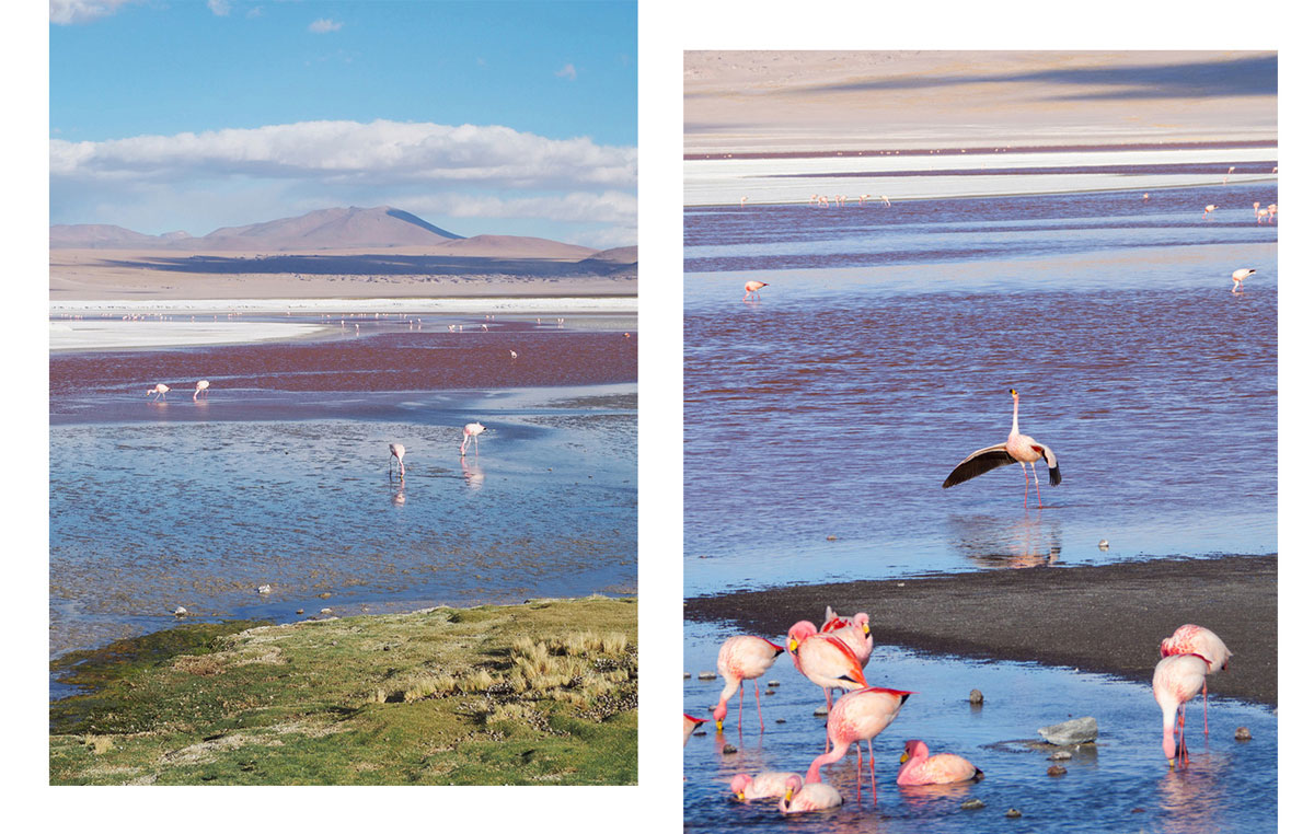 laguna colorada bolivien2 - Ausflug in die Salar de Uyuni und Laguna Colorada in Bolivien