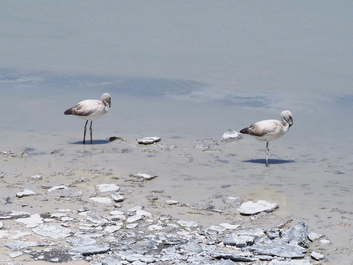 salar de uyuni laguna colorada tour bolivien 15 - Ausflug in die Salar de Uyuni und Laguna Colorada in Bolivien