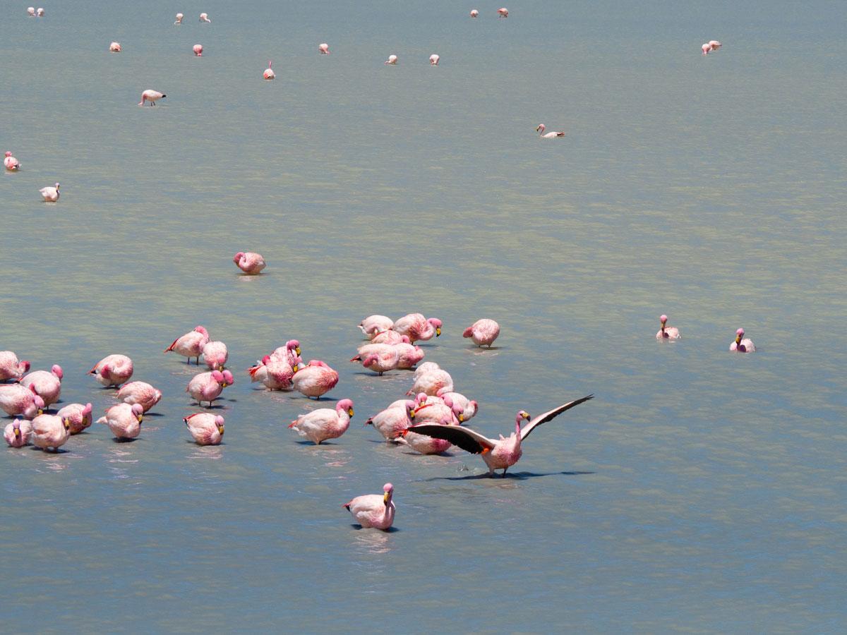 salar de uyuni laguna colorada tour bolivien 17 - Peru und Bolivien im Überblick - Reiseroute Vorschlag