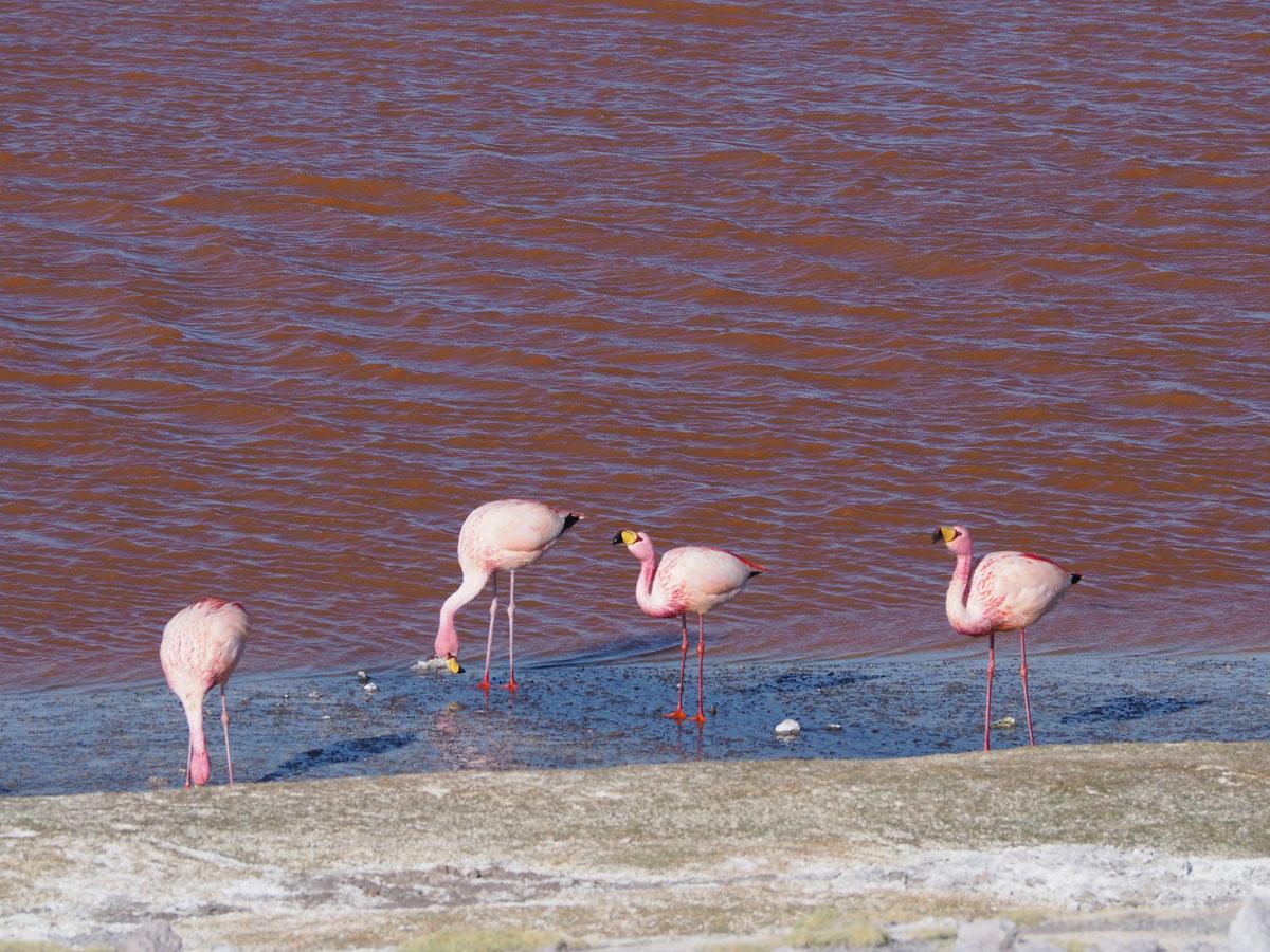 salar de uyuni laguna colorada tour bolivien 23 - Ausflug in die Salar de Uyuni und Laguna Colorada in Bolivien