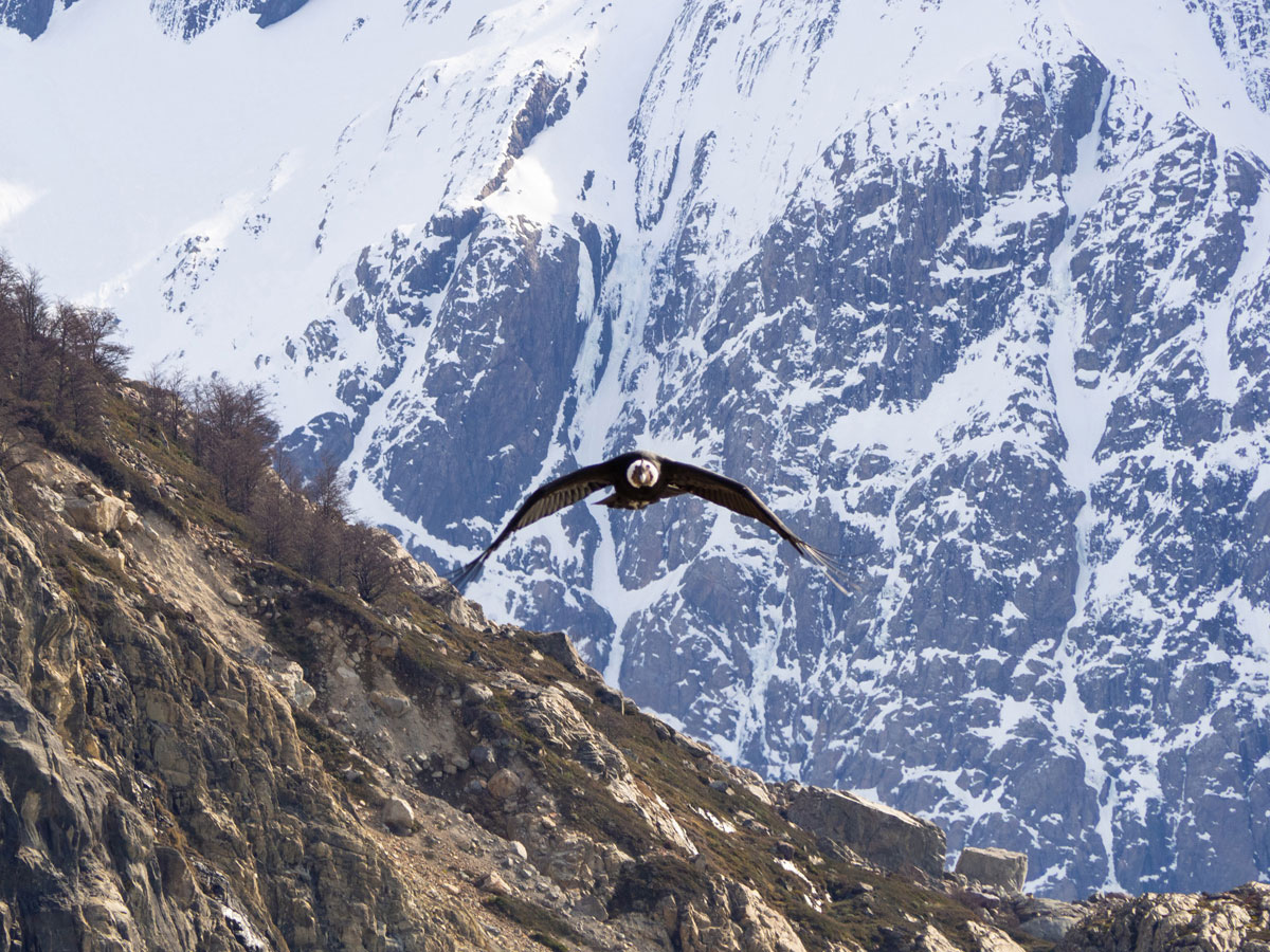 elchalten argentinien patagonien wandern 14 - Wandern in El Chalten in Patagonien, Argentinien