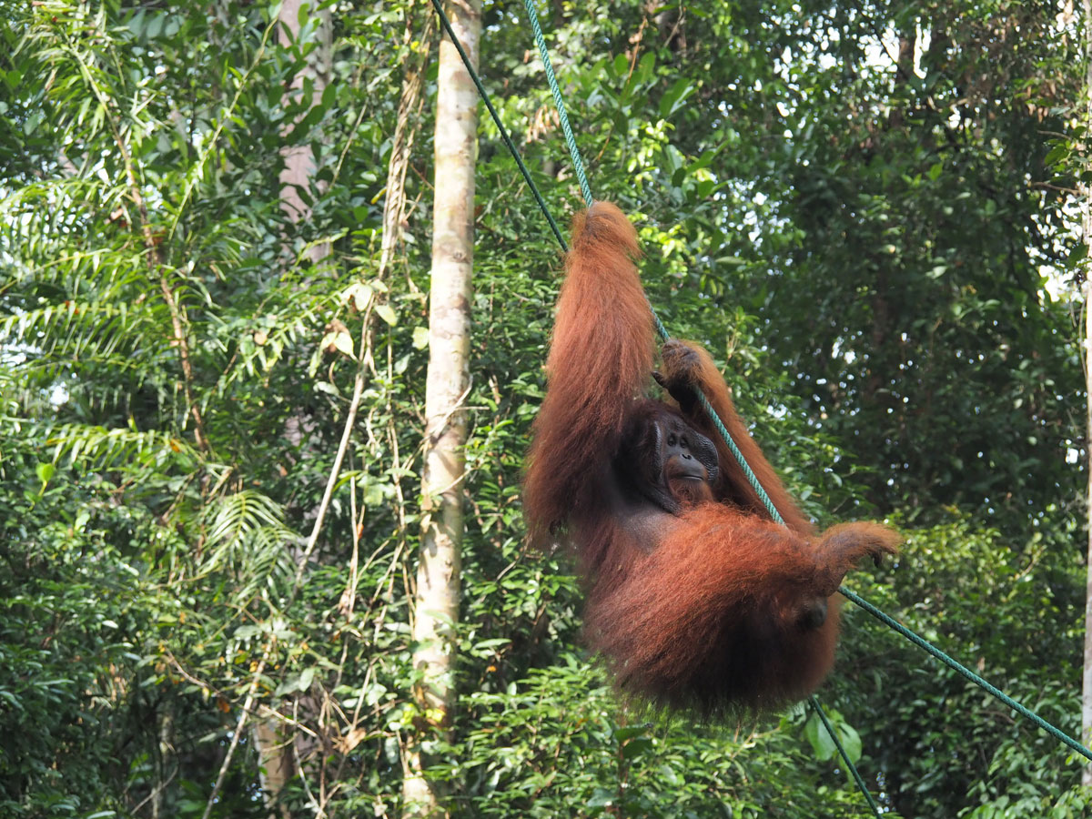 Orang Utan Bako Nationalpark, Sehenswürdigkeiten Borneo