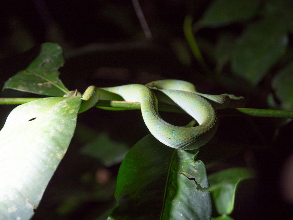 """Bako Nationalpark Nachtwanderung Tiere Borneo ("""")"""