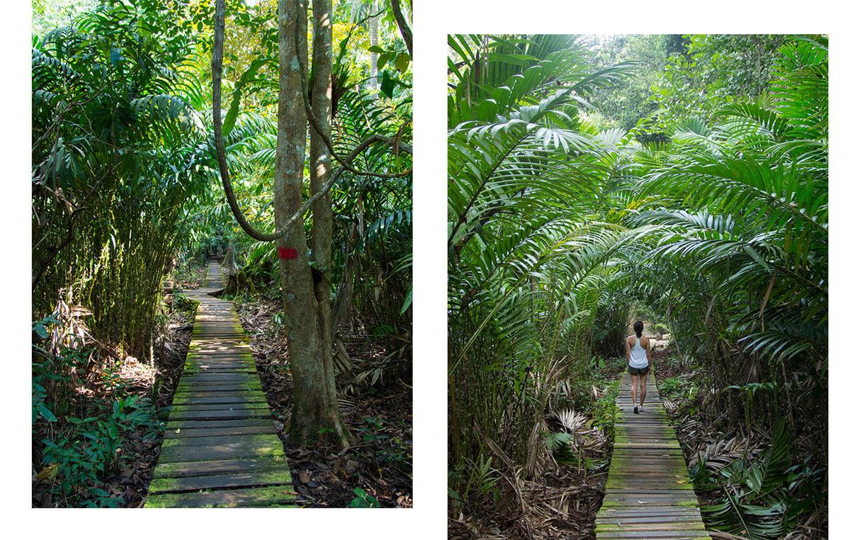 Bako Nationalpark Wandern
