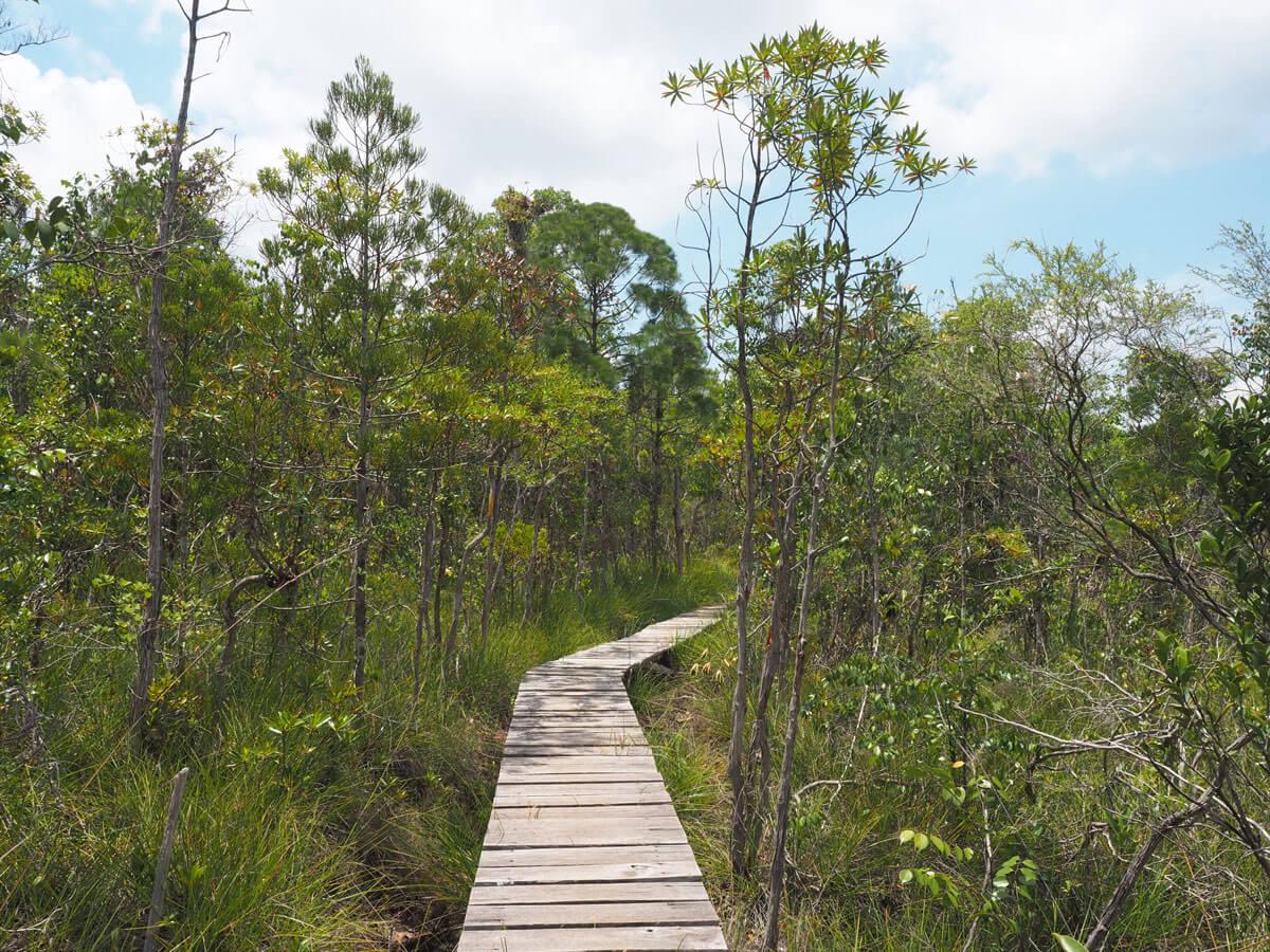 """Bako Nationalpark Wanderung Aussichtspunkt ("""")"""