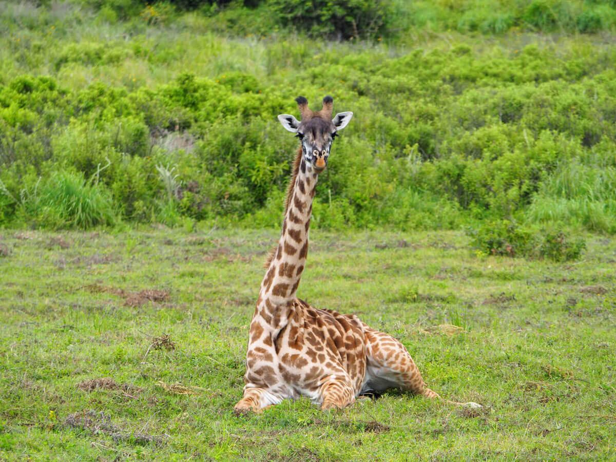 """ Arusha Nationalpark Tansania """