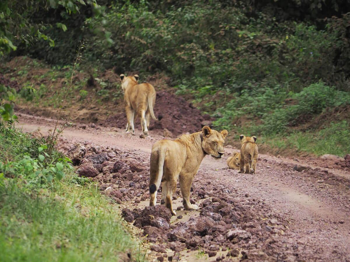 """Lake Manyara Nationalpark """""""