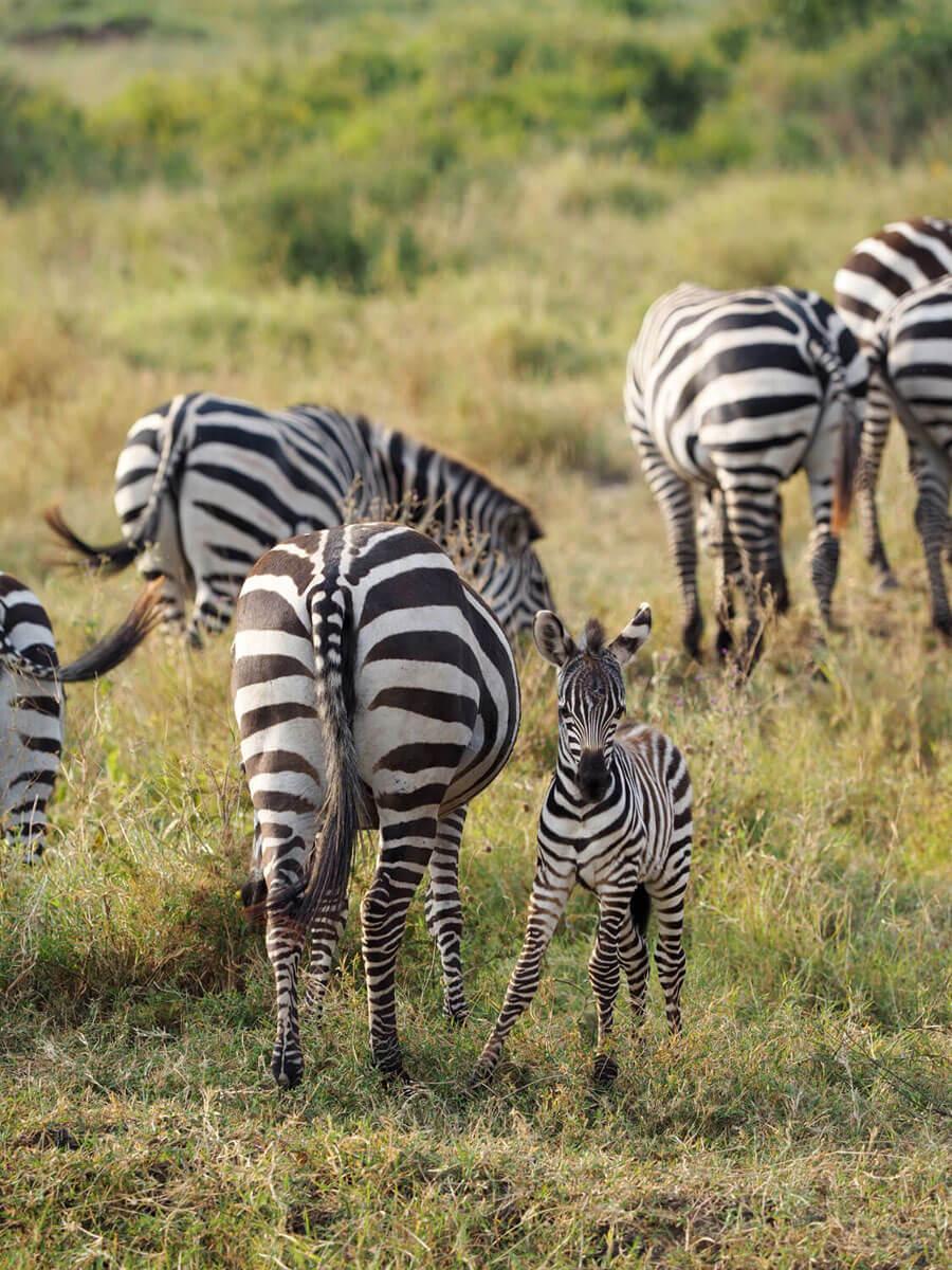 "Tansania Serengeti Nationalpark """