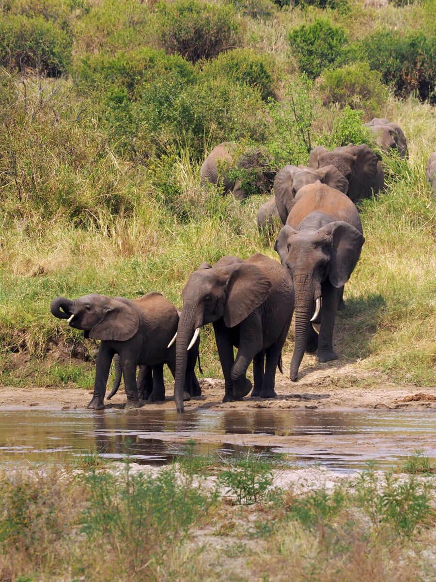 "Tarangire Nationalpark Tansania """